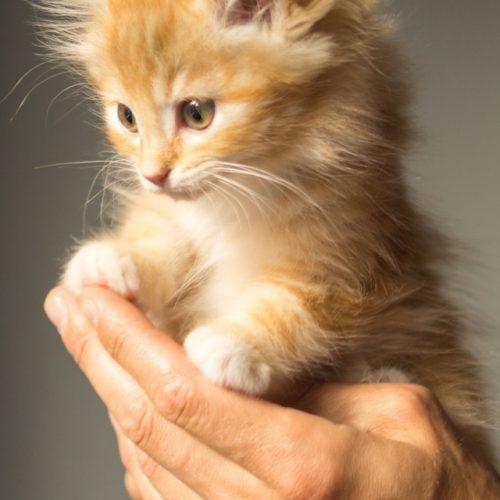 Первый котенок нашел свой дом!